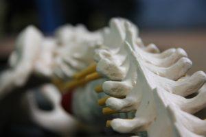 Chiropractor Palm Coast